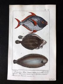 Lacepede & Oudart C1830 Hand Col Fish Print. Opah, Flounder 100